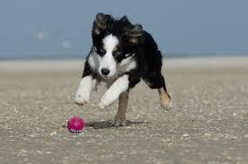 perrro corriendo
