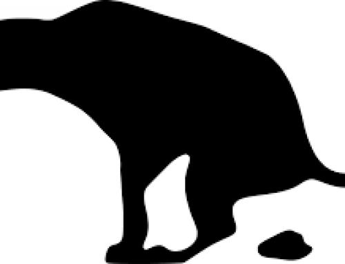 COPROFAGIA: Cuando mi perro come heces