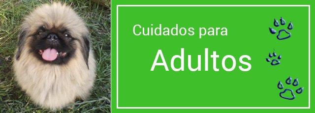 Cuidados del perro adulto