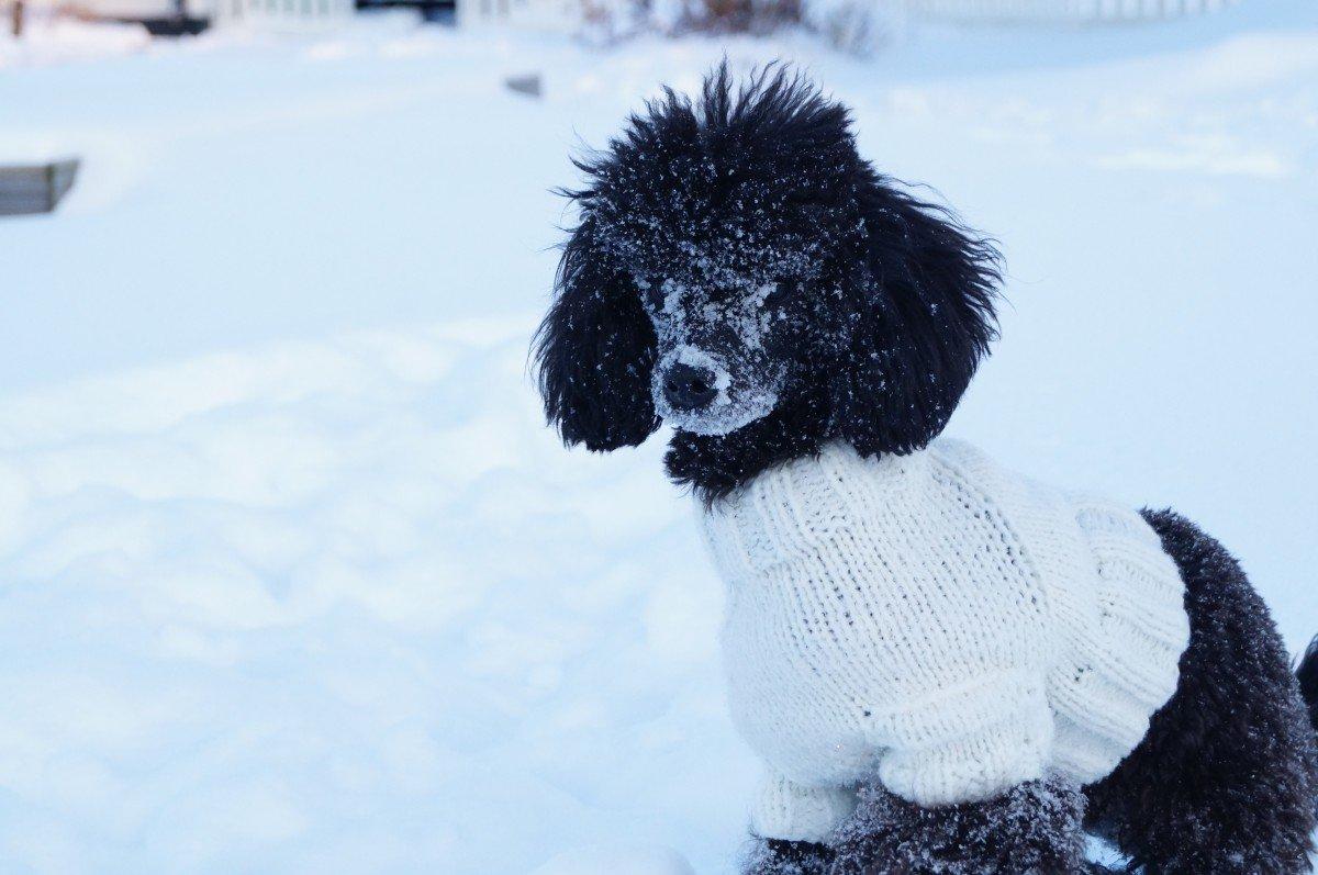 Frio en los perros