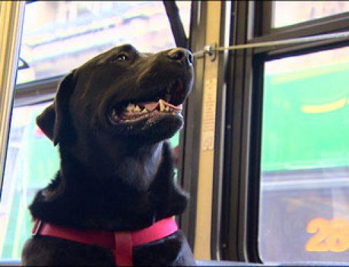 Bizkaibus permite la entrada de mascotas