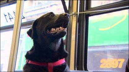 perro viajando en autobus