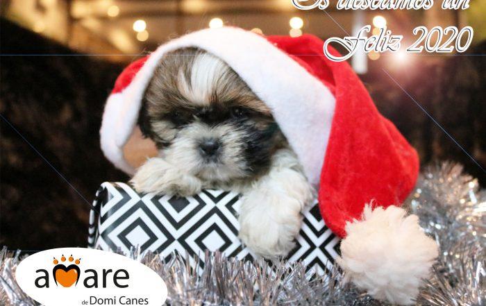 Felicitación navideña Amare